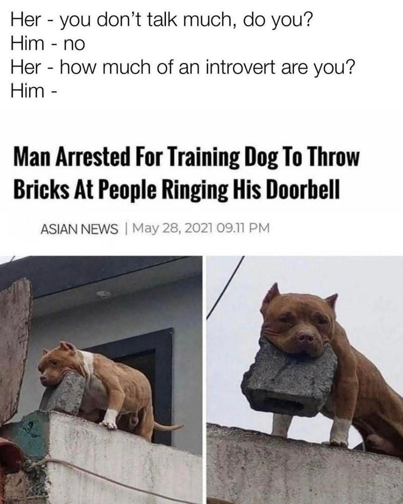 arrested-training-dog-throw-bricks-at-people-ringing-his-doorbell-asian-news-may-28-2021-0911-pm.jpg