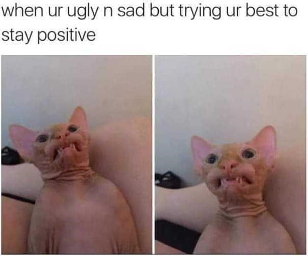 cat-ur-ugly-n-sad-but-trying-ur-best-stay-positive.jpg